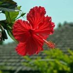 花粉アレルギーから逃れるために沖縄に行ったけど後鼻漏による咳は止まらなかった話